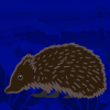 The British Hedgehog