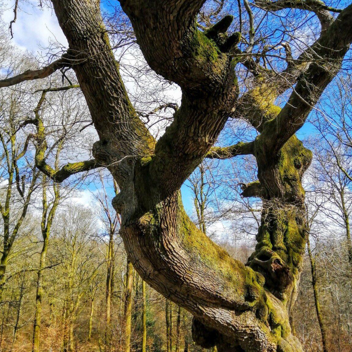 British Woodlands